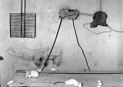 Roger Ballen, Rats on kitchen table, 1999, Gelatin silver print, 14 1/4 × 14 1/4 in (36.2 × 36.2 cm), contact gallery for price