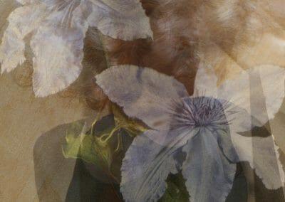 Melanie Willhide, Virgin's Bower, 2014, Archival pigment print, 22 × 19 1/2 inches