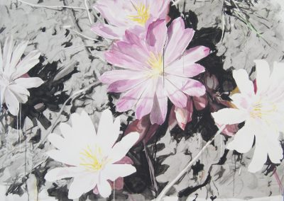 Eric LoPresti, Pink and White Lewisias with Silhouettes, 2016, Framed watercolor on paper, 38 × 50 inches