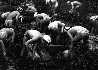Yoshiyuki Iwase, Harvesting Seaweed, 1956, Gelatin silver print, 10 x 12 in., contact gallery for price