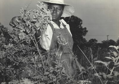 """Rosalie Gwathmey, Untitled (Berry Picker), Vintage silver gelatin print on mount, 7 9/16 x 9 1/2 in., Photographer's signature in pencil, Rosalie Gwathmey Photographer 1 West 68th St., N.Y.C. Phone Schuyler 4-3177 stamp and annotated """"PF106797"""" on verso."""