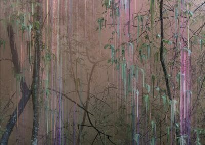 Sandra Kantanen, Untitled (Forest 19), 2016, Pigment print, Edition of 5, 20 x 16 inches
